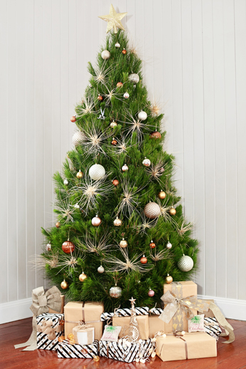 release date: 3ad13 0f6af Merry Christmas Trees - Real trees for a real merry ...